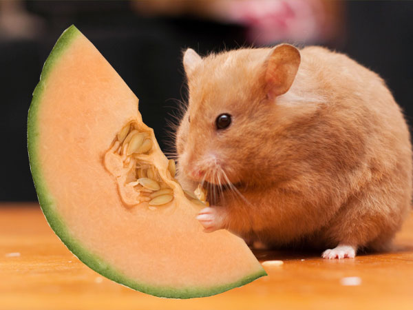 Cantaloupe Animal – 2200 x 1791 jpeg 597 кб.