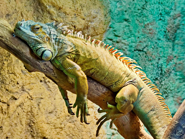 What Reptiles Can You Keep As Pets? 7 Reptiles to Consider ...